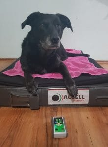 Accell Therapy For Pets