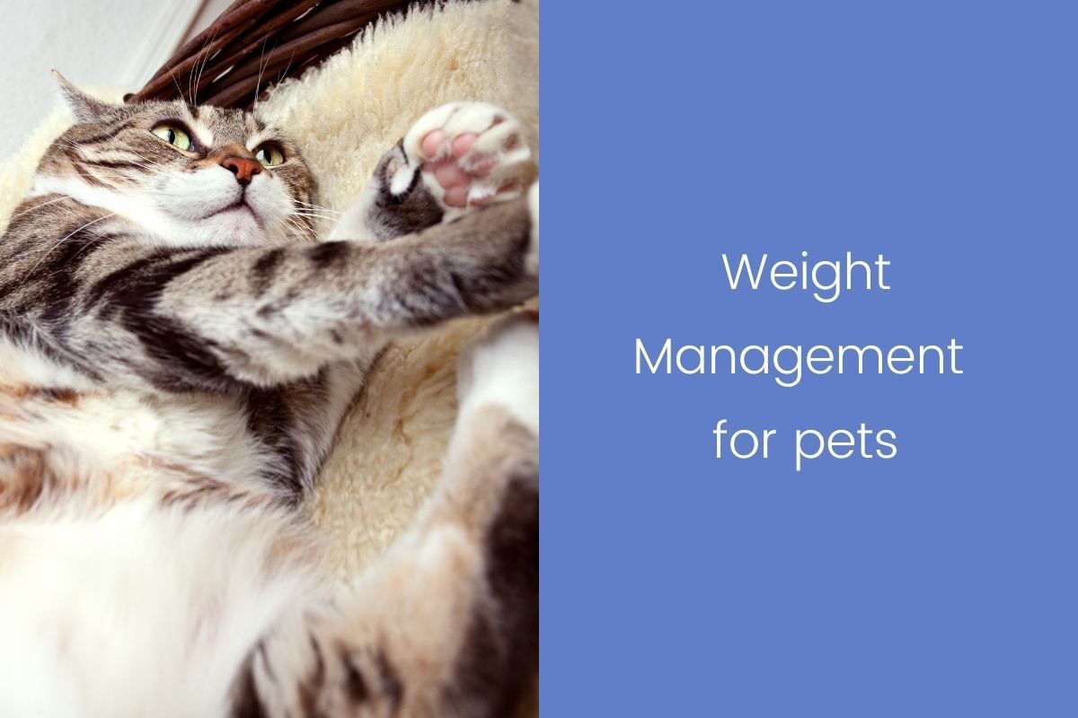 Weight-Management-for-pets