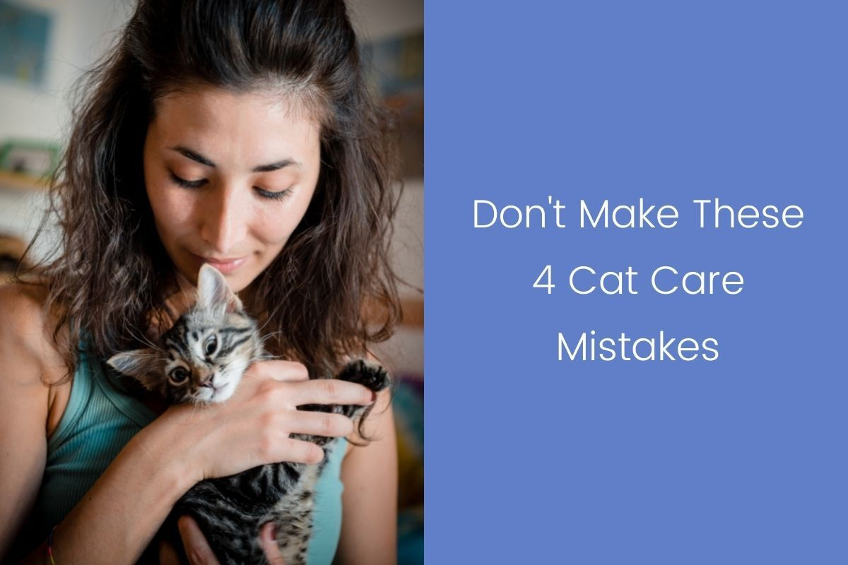 Dont-Make-These-4-Cat-Care-Mistake_20210927-073417_1