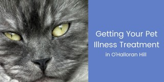 Getting-Your-Pet-Illness-Treatment-1