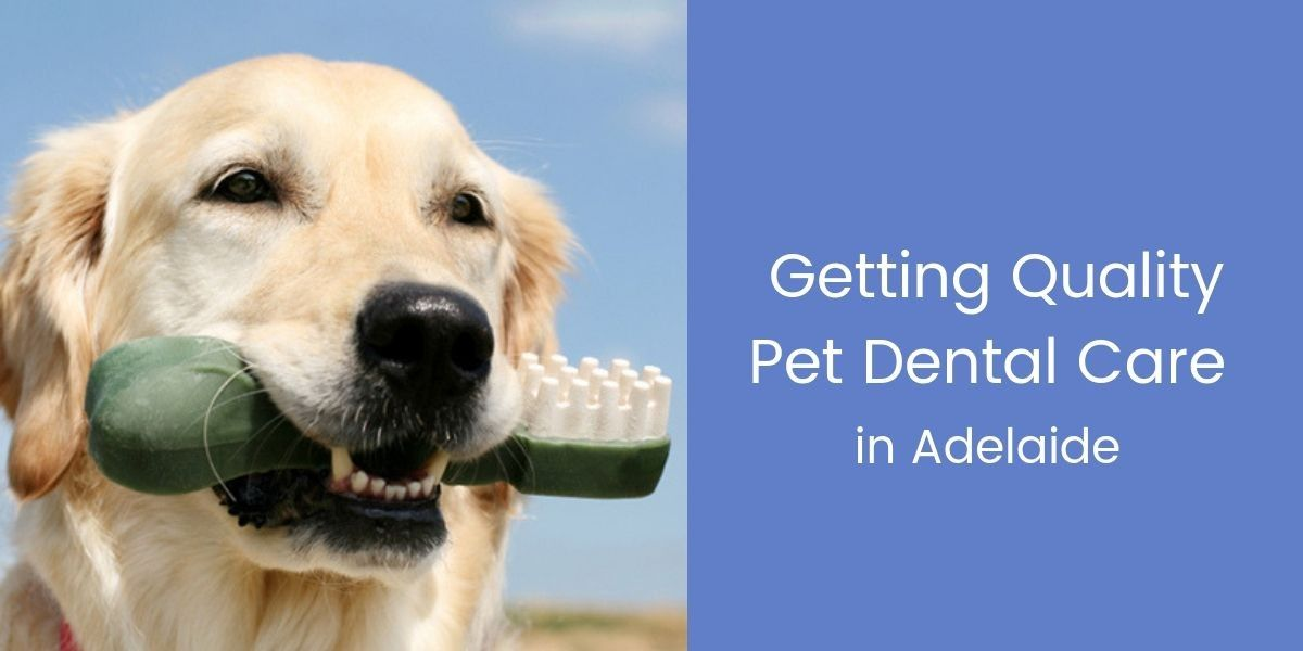 Getting-Quality-Pet-Dental-Care-in-Adelaide