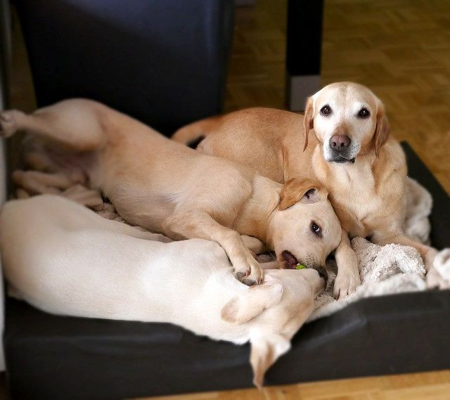 dogs-2040238_640
