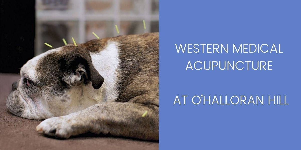 WESTERN-MEDICAL-ACUPUNCTURE-AT-OHALLORAN-HILL