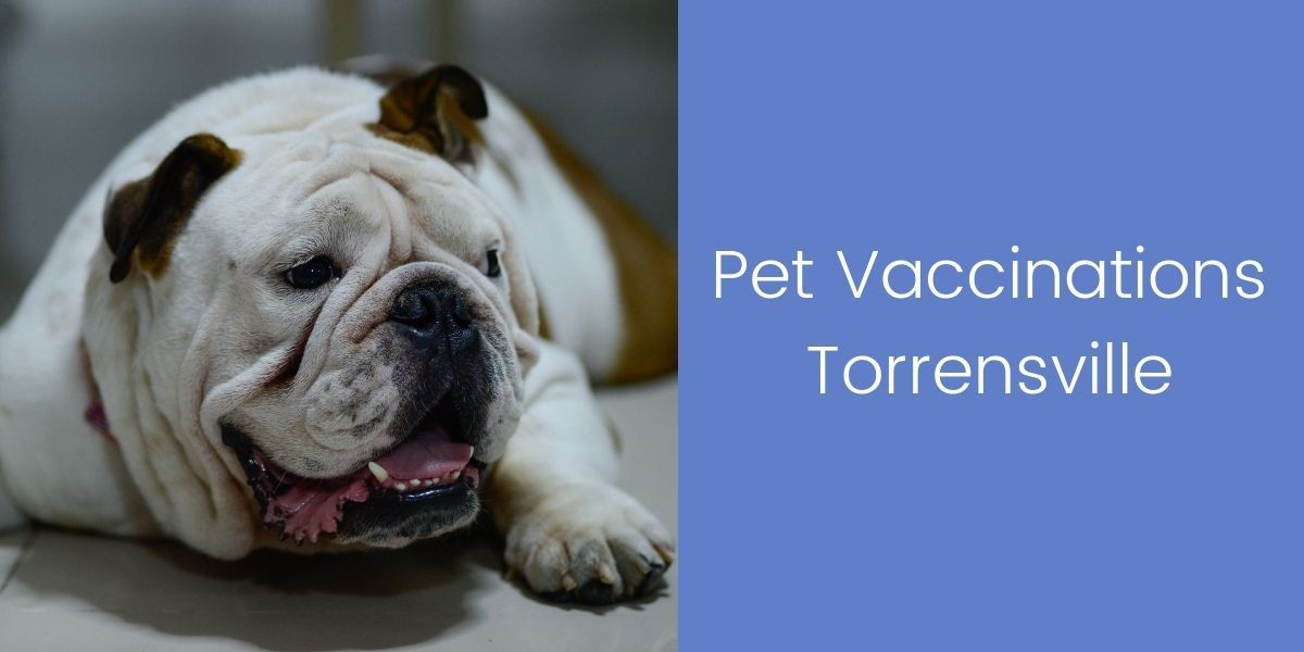 Pet-Vaccinations-Torrensville