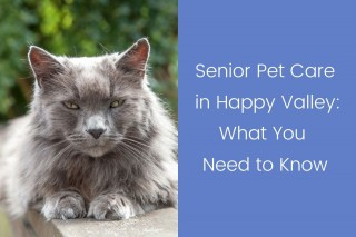 Senior-Pet-Care-in-Happy-Valley_-What-You-Need-to-Know
