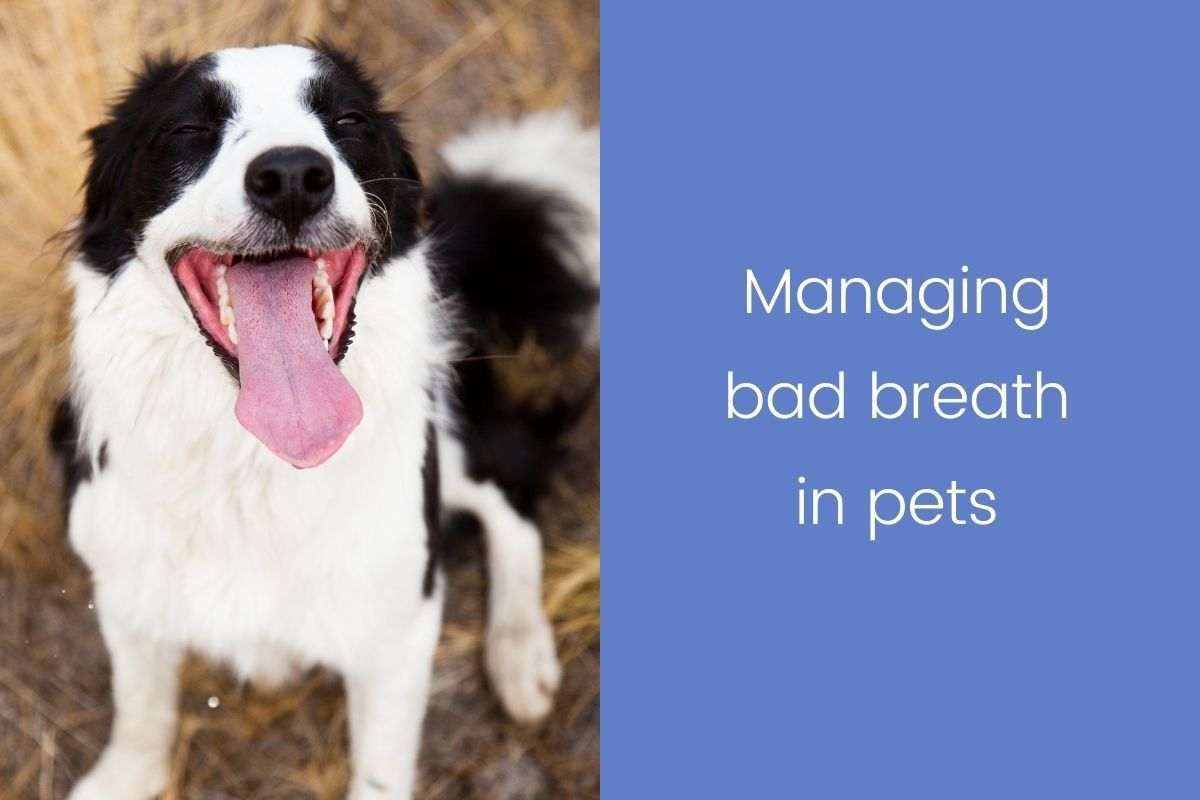 Managing-bad-breath-in-pets