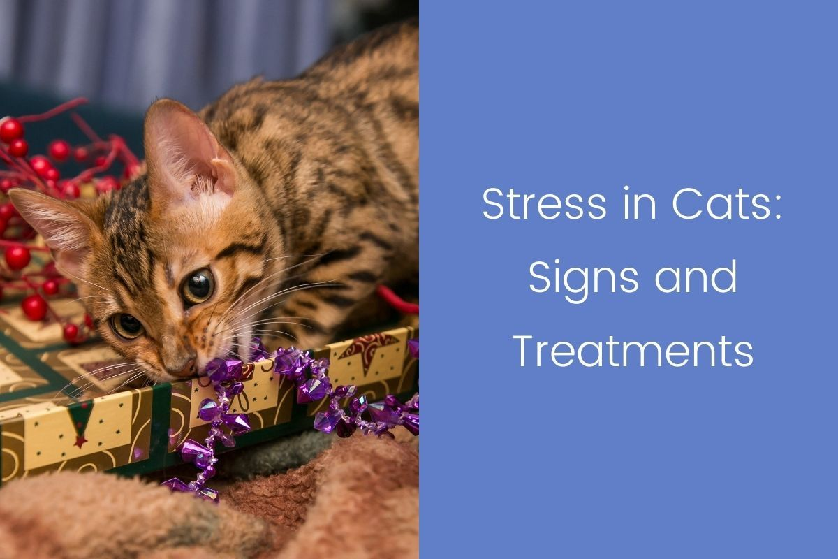 Stress-in-Cats_-Signs-and-Treatments-1