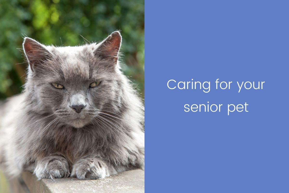 Caring-for-your-senior-pet
