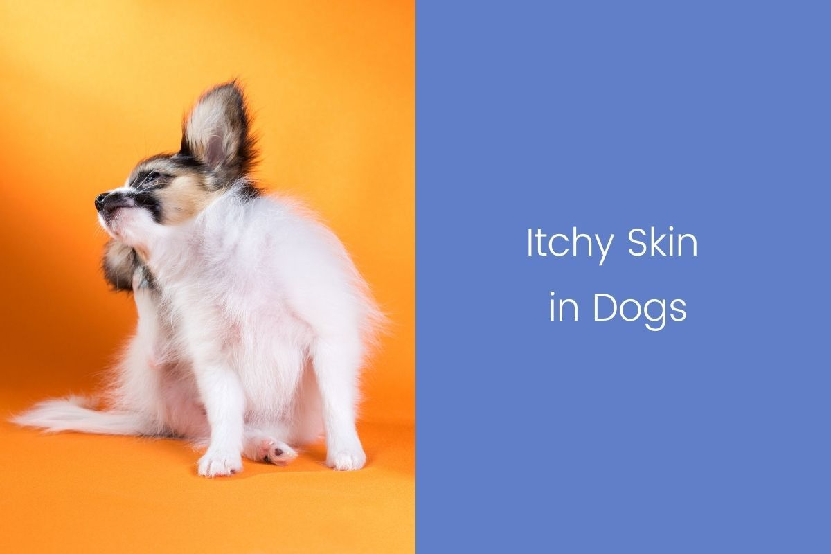 Itchy-Skin-in-Dogs-1